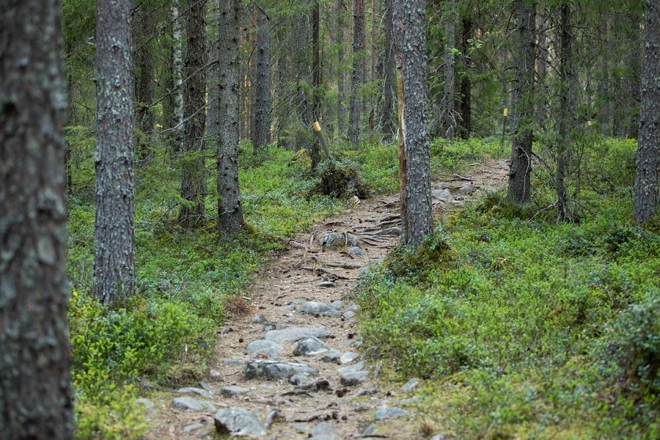 Ouluun suunnitellaan kattavaa maastoliikuntareitistöä