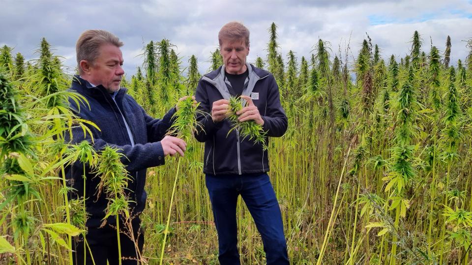 Idätettyjen superfood-kasvituotteiden valmistus käynnistyy Suomessa: Trans Farm ja Golden Malt perustavat yhteisyrityksen
